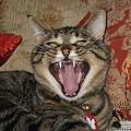 Monty's Yawn by Jolanta Anna Karolska