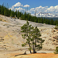 Monument Geyser Basin by Greg Norrell