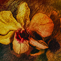 Mood Of The Orchid by Deborah Benoit