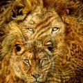 Moods Of Africa - Lions 2 by Carol Cavalaris