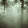 Moody Foggy Forest by Doris Aguirre