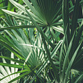 Moody Tropical Leaves by Andrea Anderegg
