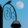 Moon And Seagull by Keith Morris