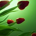 Moon  And Tulips by Nereida Slesarchik Cedeno Wilcoxon