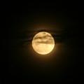 Moon Dance by Barbara S Nickerson