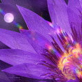 Moon Flower by Pamula Reeves-Barker