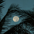 Moon Fronds Delray Beach Florida by Lawrence S Richardson Jr