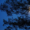 Moon Hiding In The Tree by Lilia D