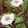 Moon Lilies by Catherine G McElroy