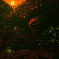 Moon Of Dark Night by Bliss Of Art