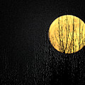 Moon Over The Trees by Craig Walters