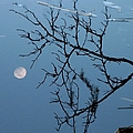 Moon Reflection by J M Farris Photography