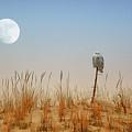 Moon Rise Snowy Owl by Raymond Salani III
