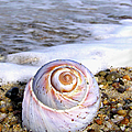 Moon Snail by Charles Harden