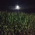 Moon Stalk by Jason Croom