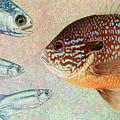 Mooneyes, Sunfish by James W Johnson