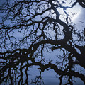 Moonlight And Oak Tree by Mitch Shindelbower