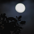 Moonlight And Tree 1 by Totto Ponce
