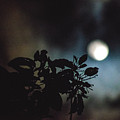Moonlight And Tree 2 by Totto Ponce