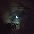 Moonlight And Tree 4 by Totto Ponce