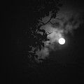 Moonlight And Tree by Totto Ponce