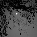 Moonlight - B And W by Arlane Crump