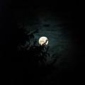 Moonlight by Carol  Eliassen