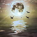 Moonlight On Water by Laura D Young