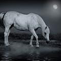 Moonlight Shadow by Joachim G Pinkawa