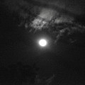 Moonlight  by Totto Ponce