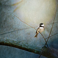 Moonlit Chickadee by Sari Sauls
