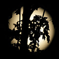 Moonlit Leaves No 1 by Alan Look