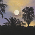 Moonlit Palms In Tampa by Donna Mann