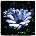 Moonlit Petals. From The Beautiful by Mr Photojimsf