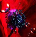 Moonlite Poppy Drops by P Donovan