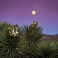 Moonrise Over Joshua Tree by Jean Noren