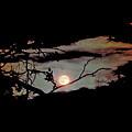 Moonrise by Thomas Firak