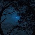 Moonshine 16 The Trees by Jouko Lehto
