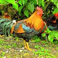 Moorea Chicken by Bill Barber