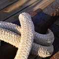 Mooring Rope by Linda Shafer