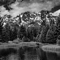 Moose At Schwabacher's Landing by Gary Lengyel