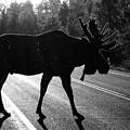 Moose Crossing by LeAnne Perry
