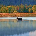 Moose Crossing by Scott Mahon