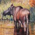 Moose In Alaska by Terri Thompson