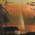 Moose In The Morning by Dolores Brittain