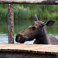 Moose In The Pond by MH Ramona Swift