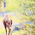 Moose In The Yard by Lori Mahaffey