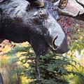 Moose In Vail by Lynn Sprowl