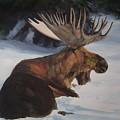 Moose In Winter by Susan Tilley