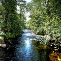 Moose River At Covewood by David Patterson